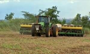 Agricultores de Mato Grosso apostam em ótima produção de milho