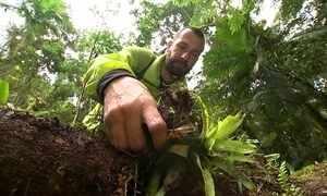 Biólogo preserva orquídeas da Mata Atlântica