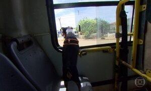 Cachorro toma até ônibus sozinho para ir atrás do dono