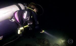 Mergulho noturno na Ilha Grande revela a magia das águas que brilham