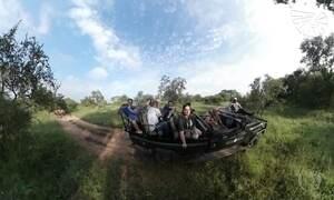 Experiência coloca filhotes de rinoceronte diante de seus olhos