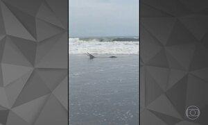 Detetive Virtual investiga se vídeo do jacaré na praia de Santos é verdadeiro