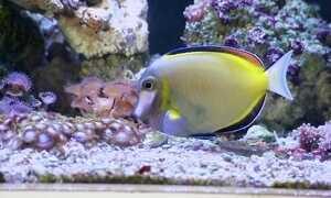 Empresário desenvolve monitoramento remoto de aquários