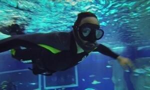 Hoje é dia de aquário: nadando com os tubarões