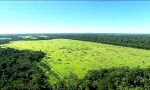 Ambientalistas condenam projeto de lei que reduz área de Jamanxim