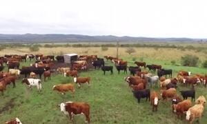 Violência de ladrões de gado faz criadores deixarem o campo
