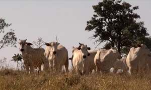 Violência no campo e roubo de gado trazem prejuízo e medo a pecuaristas