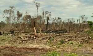 Ritmo do desmatamento na Amazônia Legal diminui depois de 5 anos