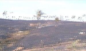 Tocantins sofre com queimadas por causa da seca