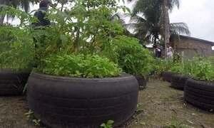 Toque de mestre: horta e viveiro de tilápias muda vida da comunidade