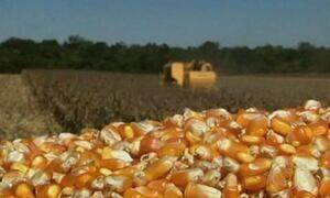 Agricultores de MG se preparam para o plantio do milho de verão