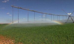 Cristalina, em GO, sofre com a falta de chuva e a má distribuição da água
