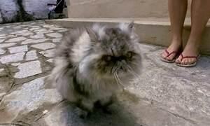 Dinheiro desviado da Previdência é usado para comprar dois gatos persas