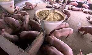 Embargo russo afeta setor de carnes no Brasil