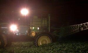 Produtores de soja aplicam defensivos de madrugada no MT