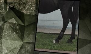 Tornozeleira eletrônica é encontrada em pata de cavalo no Paraná