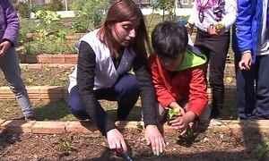 Sustentabilidade como matéria no currículo escolar