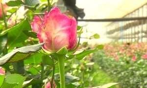 Brasil possui mais de 30 mil espécies de plantas com flores
