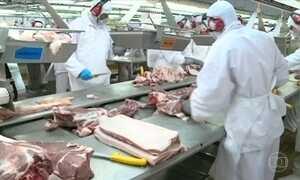 Criação de suínos vive momento delicado em Santa Catarina