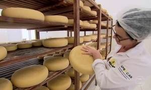 Bactéria presente em queijos como emmental é segredo do canastra real