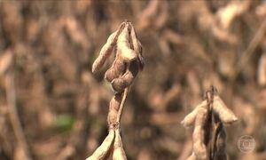 Cresce a produção de grãos orgânicos no Paraná