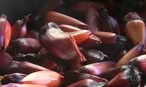 No Sul do país é época de colher pinhão