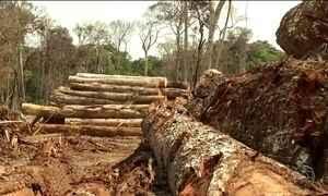 Devido ao desmatamento Brasil pode não cumprir meta no acordo de Paris