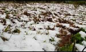 Cinco cidades da serra catarinense têm a primeira neve do inverno