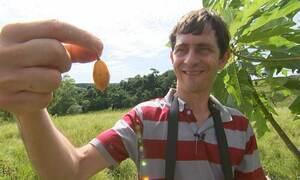 Brasileiro autodidata cria a maior coleção de frutas do mundo em pomar