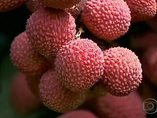 Lichia fruta preço
