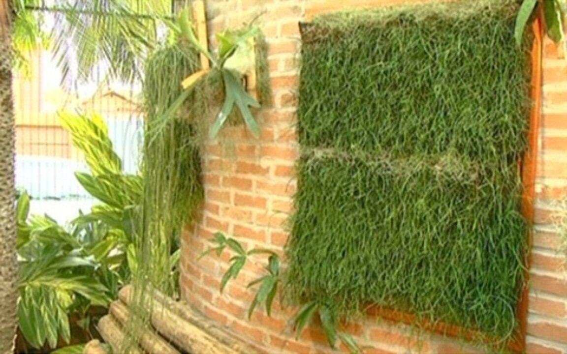 Jornal Hoje Aprenda a faezr um jardim vertical em casa ...