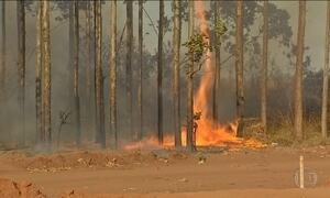 Estiagem chega mais cedo no Centro-Oeste e deflagra incêndios