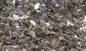 Veja como secar o orégano para conservar melhor o tempero
