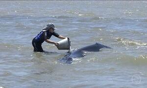 Filhote de baleia fica encalhada no Rio Sergipe