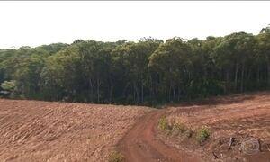 Desmatamento da Mata Atlântica volta a crescer