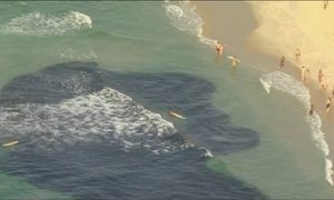 Peixes chegam à beira da praia no Rio e atraem a curiosidade de banhistas