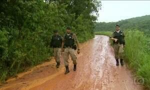Polícia descobre grande lavoura de maconha no sul de MG