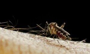 Veja como identificar e combater mosquitos transmissores de doenças tropicais