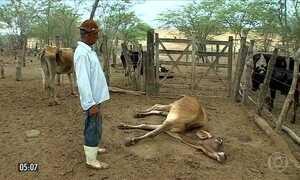 Animais agonizam sem água no sertão do Sergipe