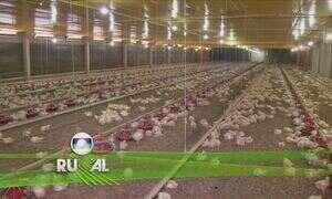 Globo Rural - Edição de 12/03/2017