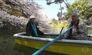 Cerejeiras enfeitam a capital do Japão