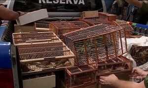 Quinhentas aves silvestres são apreendidas em Caruaru, agreste de PE