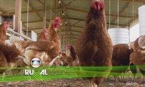 Globo Rural - Íntegra 21 Maio 2017