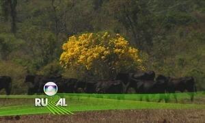 Globo Rural - Edição de 06/08/2017