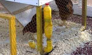 Faculdade de BH monta espaço com modelos de galinheiro caipira
