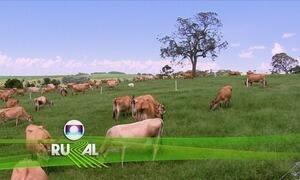 Globo Rural – Edição de 08/10/2017