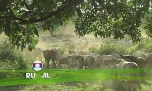 Globo Rural - Edição de 26/11/17