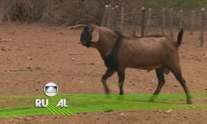 Globo Rural - Edição de 03/12/2017