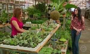 Soluções para deixar a casa mais verde sem gastar muito