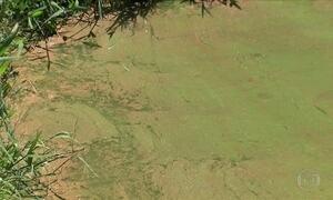 Como acabar com as algas que aparecem no tanque dos peixes?